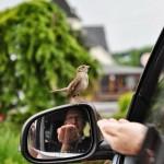 birdcaption
