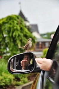 birdcaption1