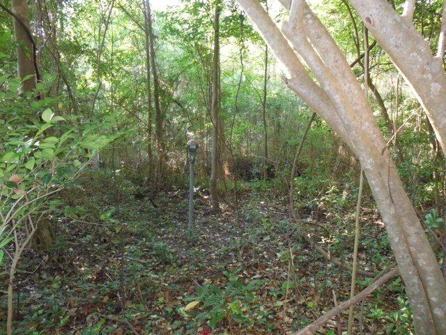 Can you see it? Photo courtesy of Tallahassee-Lassie