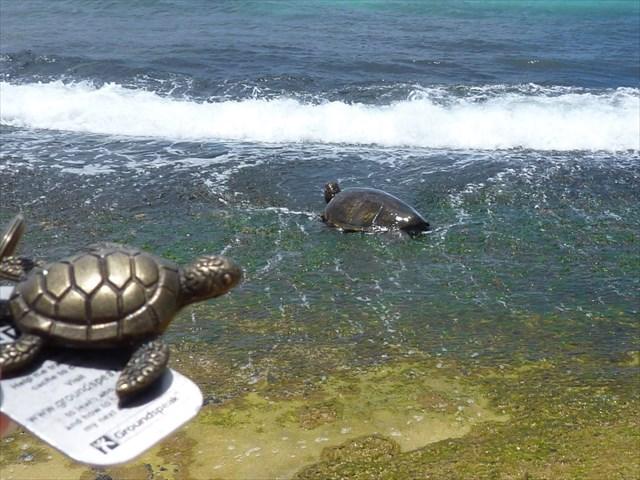 Turtle TB, meet Turtle