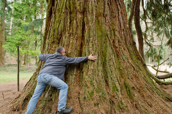 I bet this geocacher made sure to CITO after hugging the tree. Photo by geocacher Vincent05