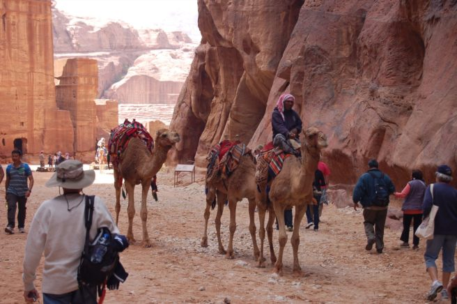 Camels through Petra