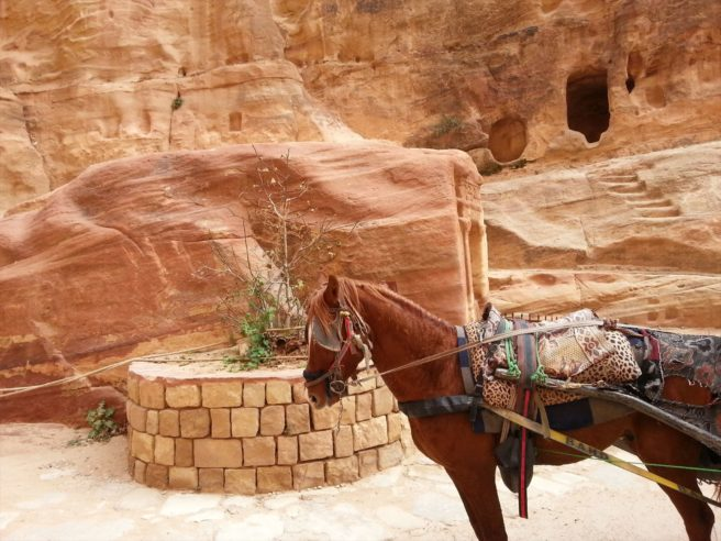 Horse transport at Petra