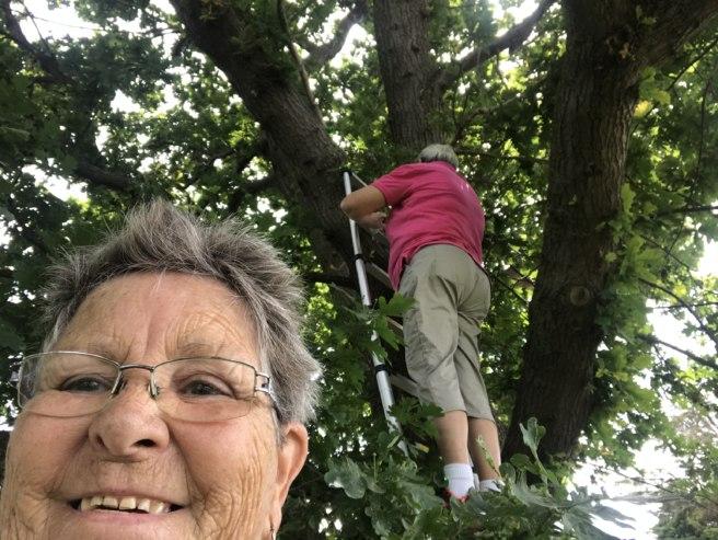 Grabbing a tree cache
