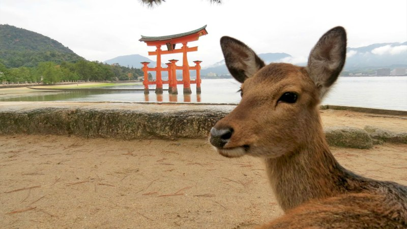 Geocache of the Week — Symbol of Miyajima