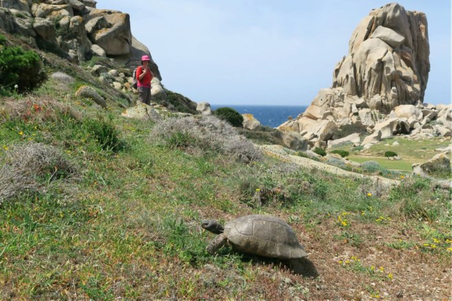 A steadfast tortoise along the path
