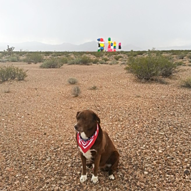 Desert geocaching can be ruff
