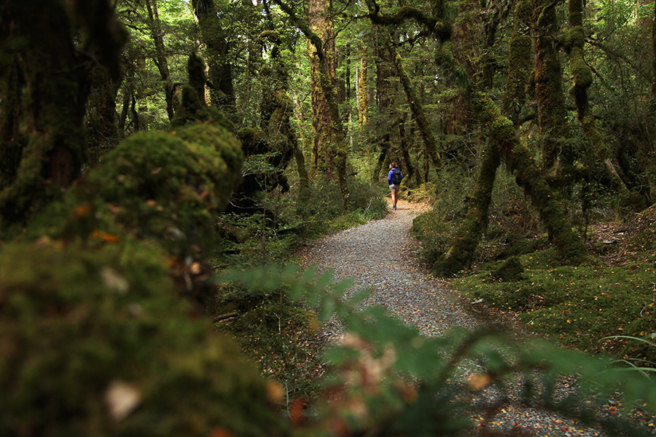 Lake Gunn Fishermans Rest (Milford Rd, Fiordland) – Geocache of the Week