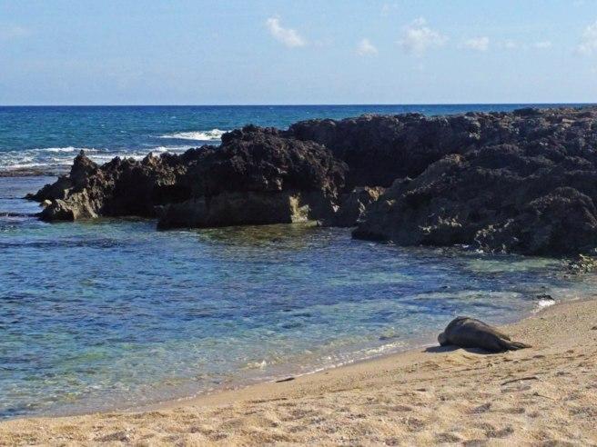 Kaena Point CITO, Hawaii —GC7VHK1