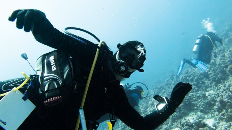 Tauchen im Roten Meer / Diving in the Red Sea